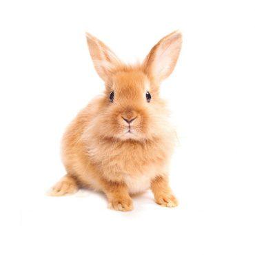 Das Kaninchen – Langohr mit Charakter