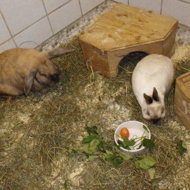 Lissi und Bubbi