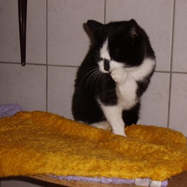 Fundkater