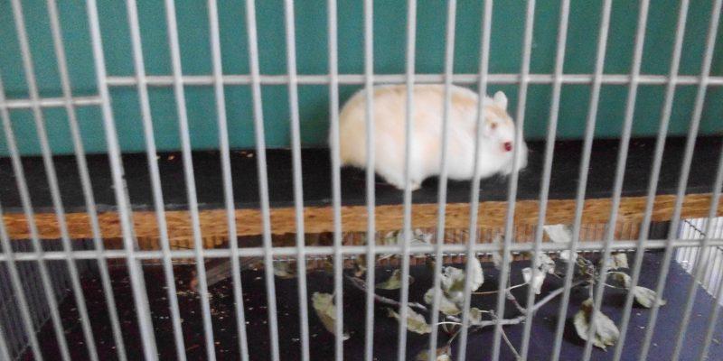 HamsterPICT7041